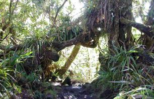 Hike in Belouve Forest on La Réunion