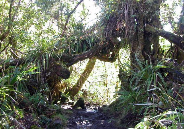 Randonnée dans la forêt de Belouve de La Réunion - La Réunion et ses sites touristiques -