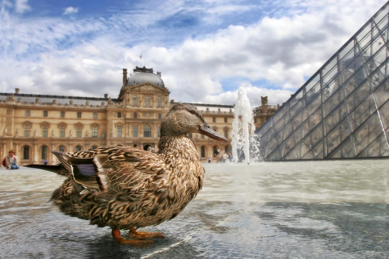 Tickets, museos, atracciones,Tickets, museums, attractions,Museos,Museums,Torre Eiffel,Museo del Louvre,Visita guiada