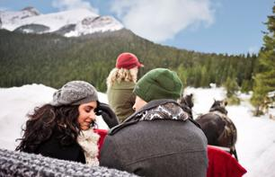 Romantic Horse-Drawn Sleigh Ride in the Canadian Rockies – Private tour departing from Banff