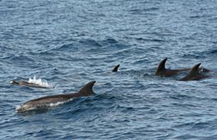 Dolphin Watching Boat Trip in Gibraltar