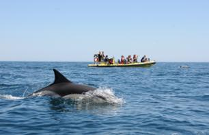 Zodiac boat cruise on the Algarve coast with cave visits and dolphin observation - Albufeira