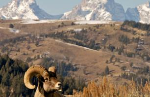 Day trip to the Grand Teton National Park - Leaving from Jackson
