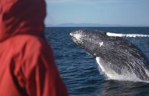 Whale Discovery Cruise – Departure Reykjavik