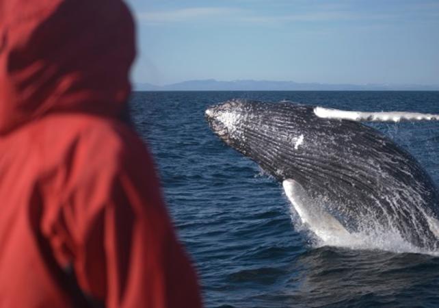 ,Avistamiento de ballenas,Whale watching in Reykjavik