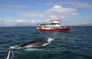Whale & Puffin Watching Cruises – Departure Reykjavik