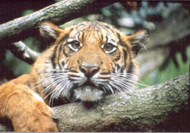 Photo Zoo de Londres