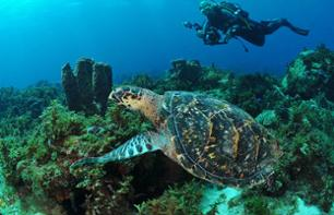 Scuba Diving in Martinique – 1, 3, 6, 10 or 15 sites – Departing from the Trois Îlets