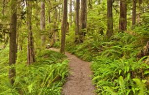Snowshoe or walking tour in the Olympic National Park
