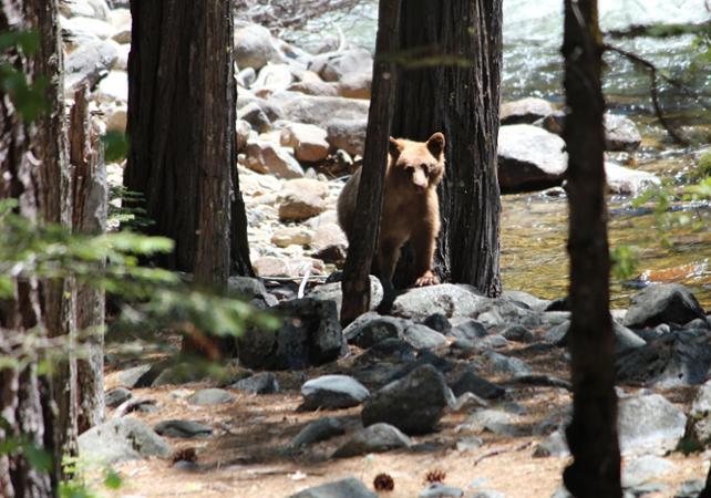 Excursion au parc national Yosemite au départ de San Francisco – VIP tour - San Francisco -