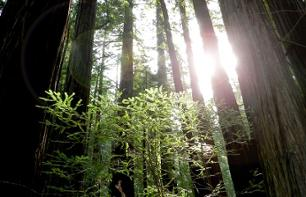 Excursion in the Muir Woods and wine tasting in Sonoma & Napa Valley - optional lunch - Departure from San Francisco