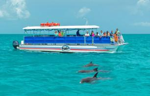 Meet the Key West Dolphins