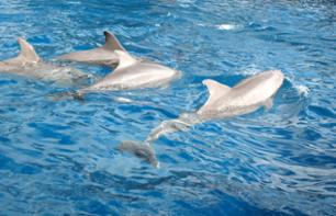 Dolphin-Watching Cruise + Snorkeling