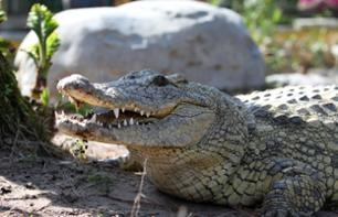 Gatorland Ticket - Alligator Park in Orlando