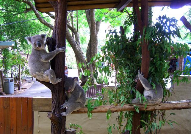 Entrée au Lone Pine Koala Sanctuary & Observatoire du Mt Coot Tha image 2