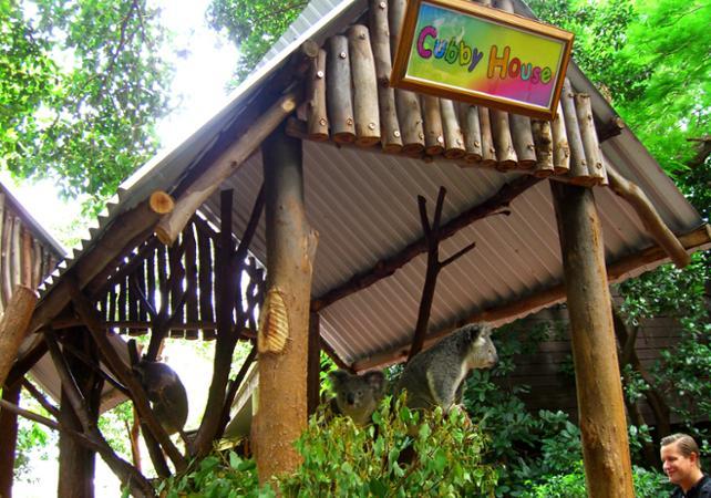 Entrée au Lone Pine Koala Sanctuary & Observatoire du Mt Coot Tha image 4