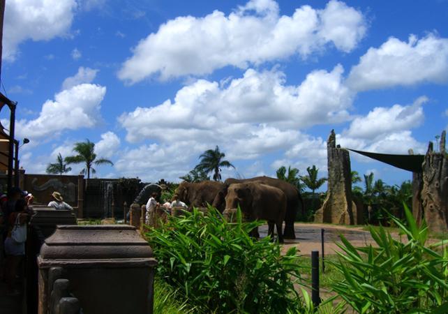 Visite du Zoo d'Australie – Au départ de Brisbane ou Gold Coast image 8