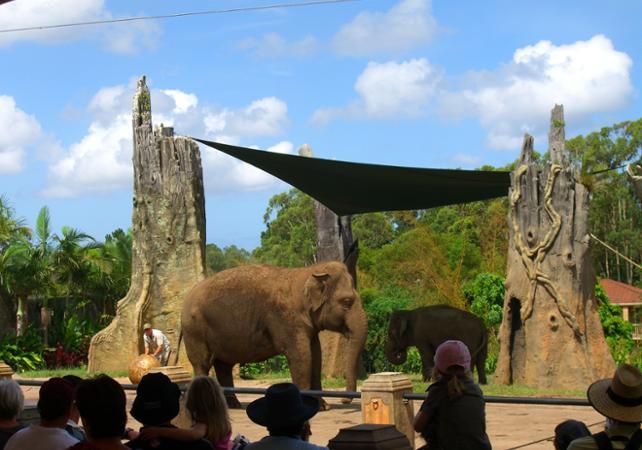 Visite du Zoo d'Australie – Au départ de Brisbane ou Gold Coast image 10