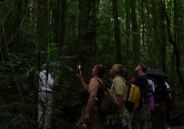 Excursion sur la Gold Coast et découverte du parc national de Springbrook - Une journée au départ de Brisbane image 10