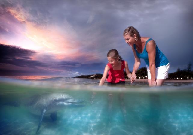 Croisière d'observation des baleines & dauphins sauvages à Moreton Island – Au départ de Brisbane image 10