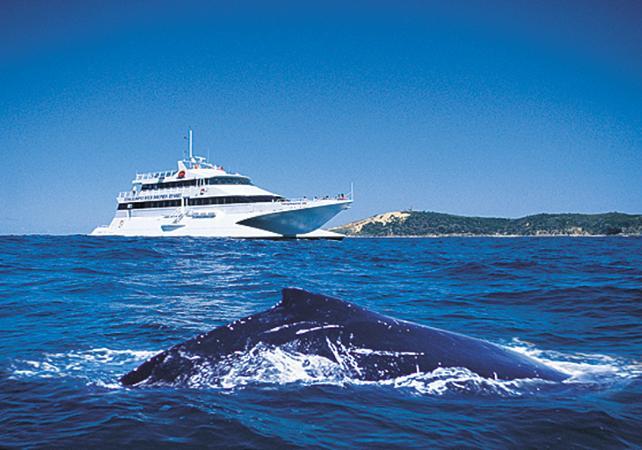 Croisière d'observation des baleines & dauphins sauvages à Moreton Island – Au départ de Brisbane image 2