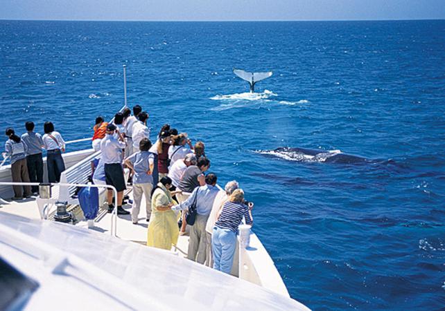 Croisière d'observation des baleines & dauphins sauvages à Moreton Island – Au départ de Brisbane image 3