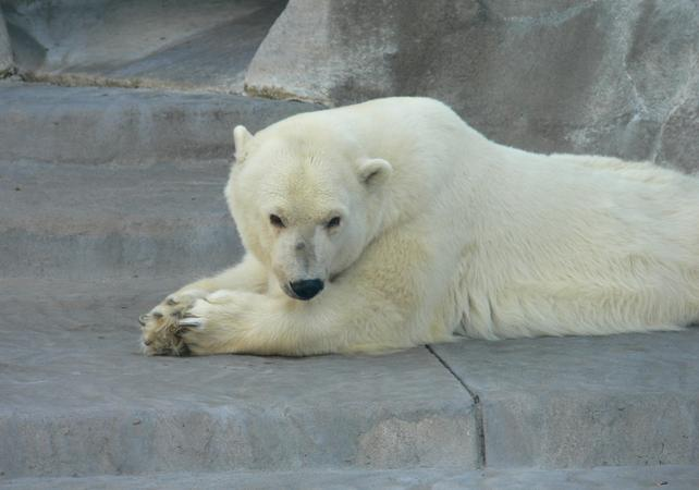 Journée au Zoo Temaikèn image 2