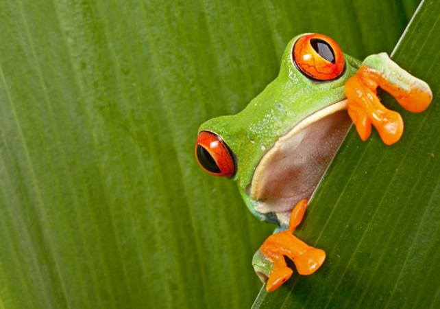 Découverte de la forêt et des plages du parc national Manuel Antonio - San José (Costa Rica) -