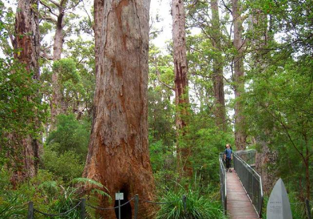 Excursion au cœur la Vallée des Géants – Au départ de Perth image 3