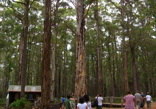 Excursion au cœur la Vallée des Géants – Au départ de Perth image 6