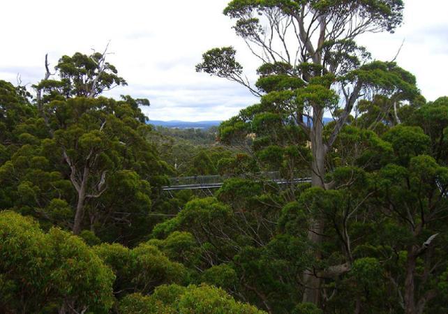 Excursion au cœur la Vallée des Géants – Au départ de Perth image 5
