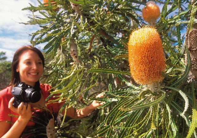 Visite guidée sur la thème des fleurs d'Australie Occidentale image 2