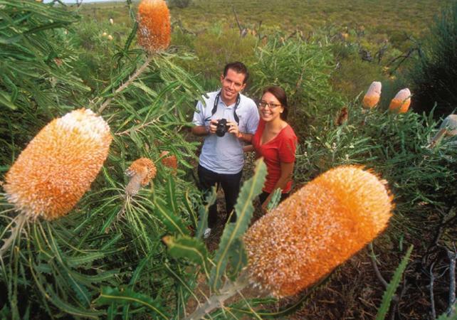 Visite guidée sur la thème des fleurs d'Australie Occidentale image 1