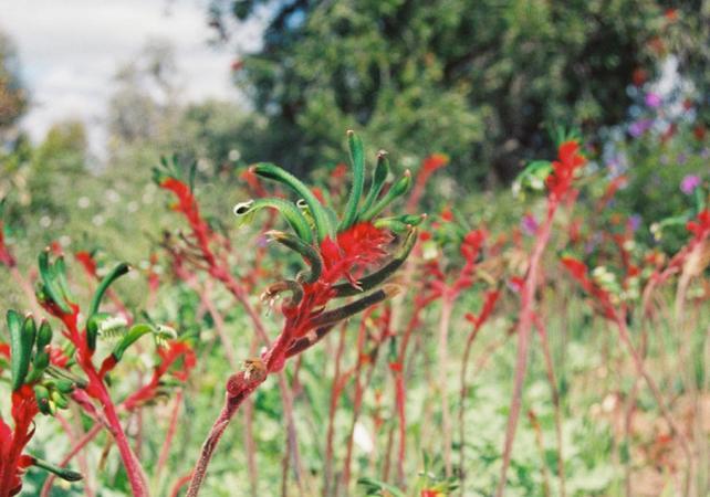 Visite guidée sur la thème des fleurs d'Australie Occidentale image 4