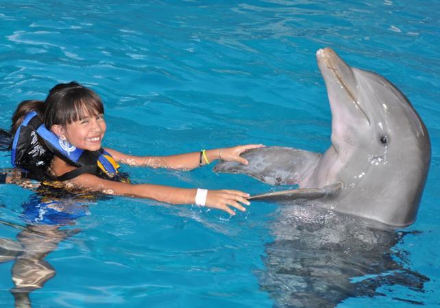 Photo Billets pour le parc d'attractions Six Flags Mexico et rencontre avec les dauphins