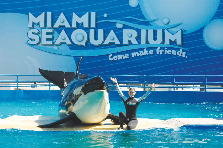 Tickets, museos, atracciones,Entradas a atracciones principales,Parques de atracciones,Miami Seaquarium