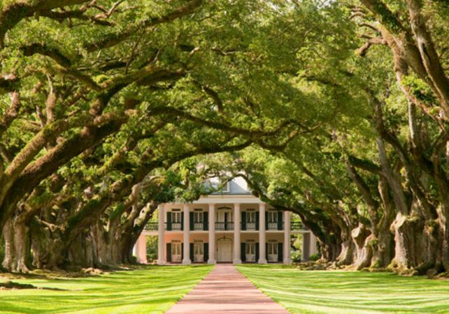 Visite guidée de la plantation  « Oak Alley » – Transport inclus depuis la Nouvelle-Orléans - La Nouvelle-Orléans -