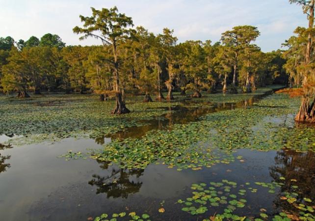 Tour en bateau dans les bayous – Transport inclus depuis la Nouvelle-Orléans - La Nouvelle-Orléans -