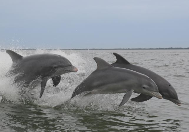 Salir de la ciudad,Actividades,Actividades acuáticas,Playa de Clearwater