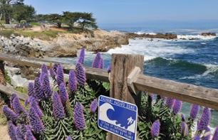 Day Trip on the Pacific Coast: Visit Monterey and Carmel from San Francisco