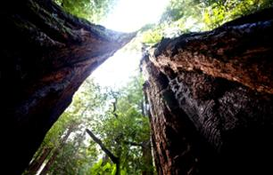 Muir Woods and Sausalito, Half-Day Excursion Departing from San Francisco