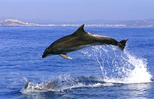 Dolphin Watching in Gibraltar – Departing from Costa del Sol