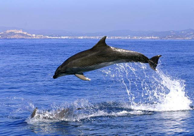 Observation des dauphins à Gibraltar - au départ de la Costa del Sol