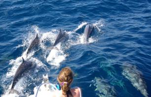 Dolphin Observation Cruise in Martinique - Depart from Trois-Îlets
