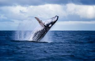Cetacean Observation Cruise – Guadeloupe