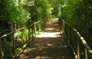 Hike in the Queimadas Ecological Park - Departing from Funchal