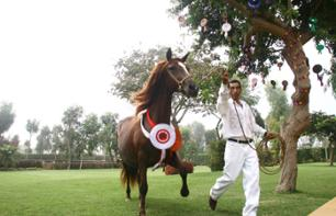 Horse show with Peruvian Pasos