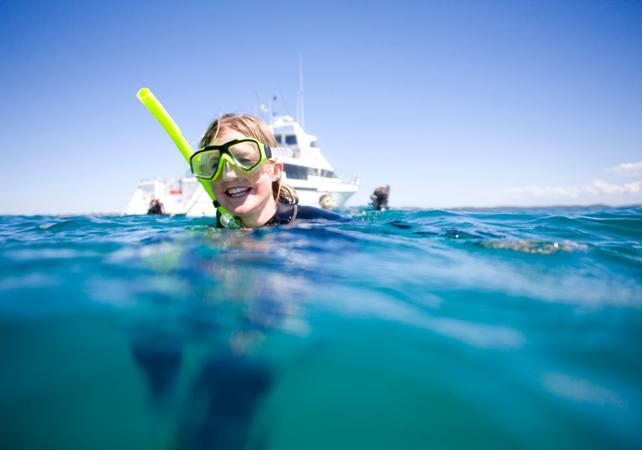 Nage avec les dauphins et les phoques sauvages dans la baie de Port Phillip – Départ depuis Sorrento image 2