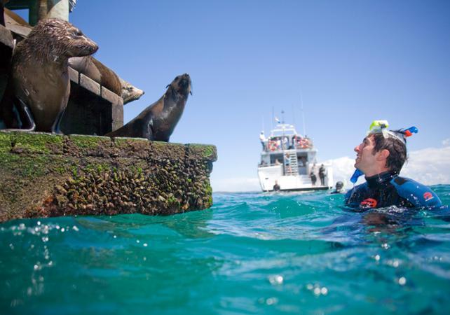 Photo Nage avec les dauphins et les phoques sauvages dans la baie de Port Phillip – Départ depuis Sorrento