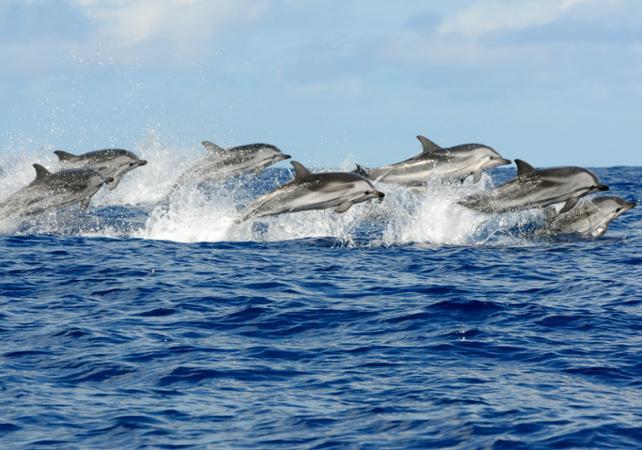 Croisière d'observation des dauphins et des phoques sauvages – Départ depuis Sorrento image 1